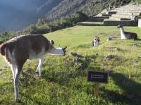 Peru trip Jun 10 2013-2
