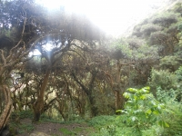 Whittemore Inca Trail May 07 2014-1