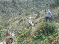 Erin Inca Trail August 03 2014-2