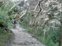 Sylvia Inca Trail July 17 2014-2