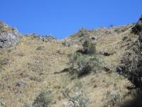 Samir Inca Trail August 15 2014-1
