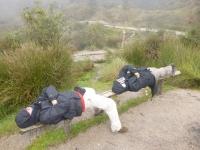 Peru trip January 29 2015