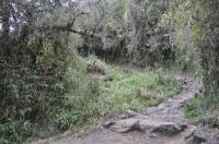 Machu Picchu travel August 29 2011